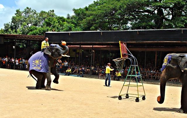 Pattaya Elephant Show