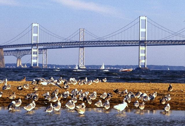 Chesapeake_Bay_Bridge