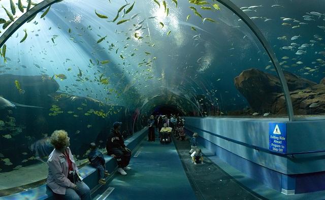 Georgia_Aquarium